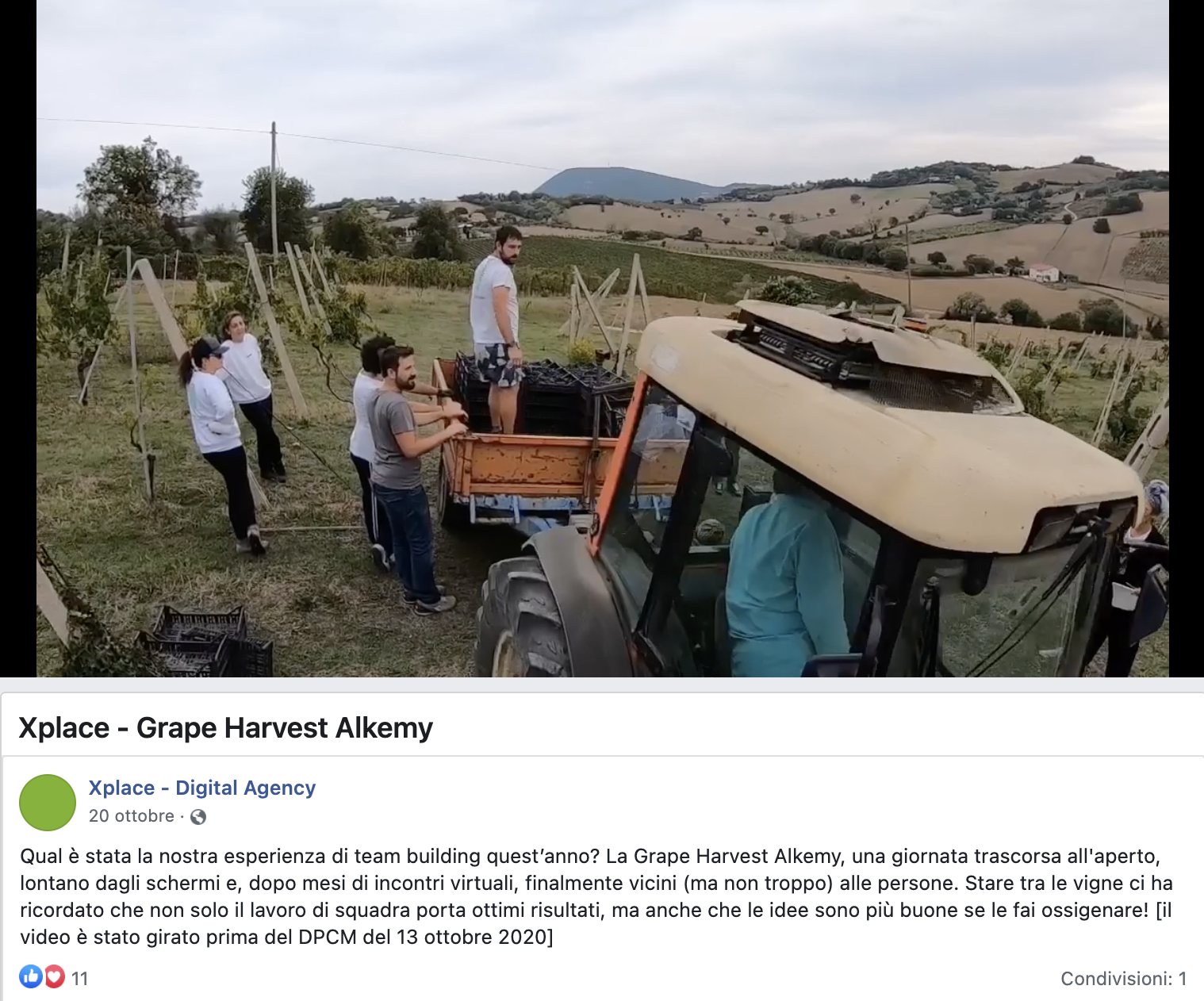 Team Building Grape Harvest Alkemy